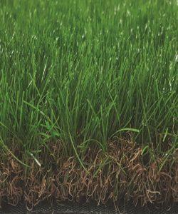 60mm Artificial Grass