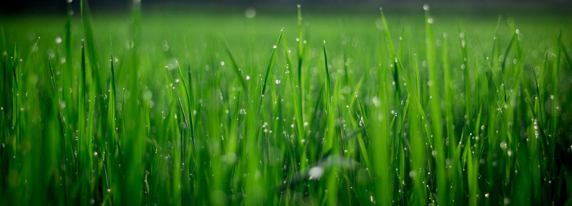 artificial grass by halafurniture